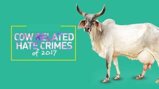 Cow Related Hate Crimes Of 2017