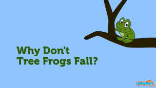 Tree Frogs Facts Why don't they fall
