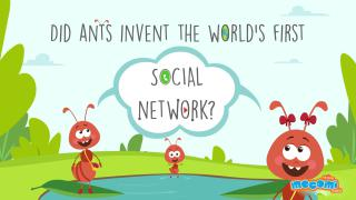 Did ants invent the world's first social network