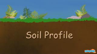 Soil Profile of Earth - Soil Layers and Horizons